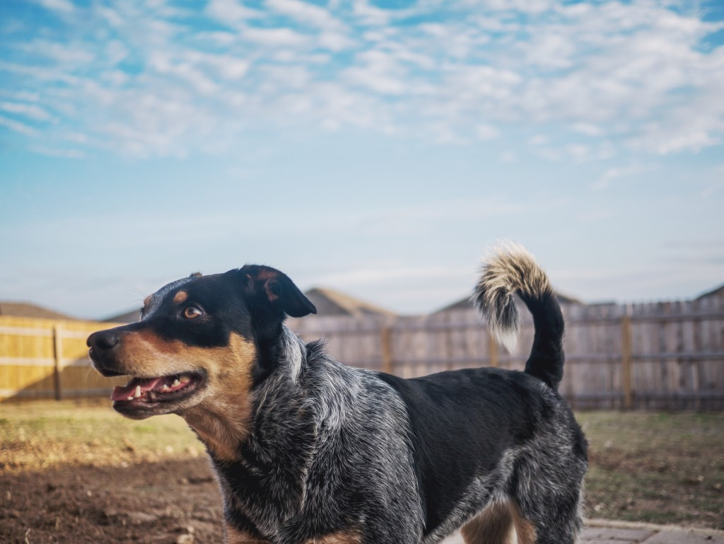 Why Dog Owners Need Dog Liability Insurance